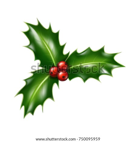 Vector realistic Christmas holly isolated on background