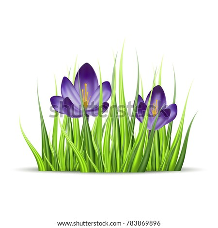 vector realistic flower of