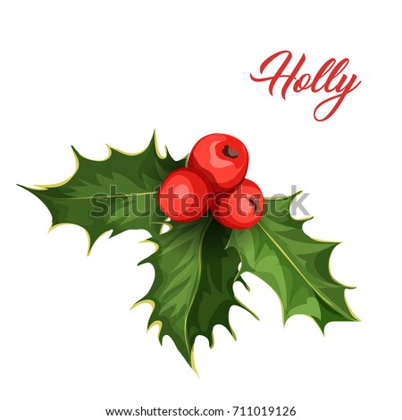 vector realistic hand drawn holly, ilex branch with berry and leaves, mistletoe. Christmas, new year holiday celebration symbol. Isolated illustration on a white background.