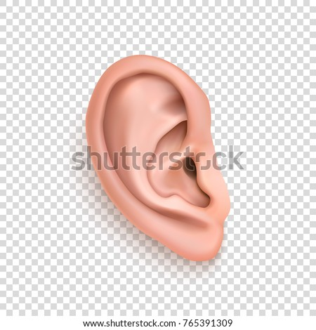 Vector realistic human ear icon closeup isolated on transparency grid background. Design template of body part, human organ