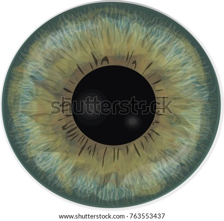 vector realistic human eye iris