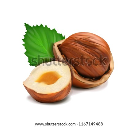 Vector realistic illustration of a hazelnut peeled whole, chopped into halves and green hazel leaves isolated on white.