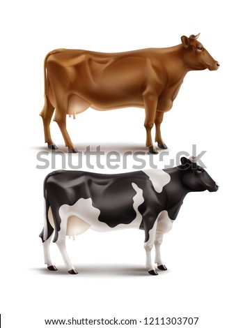 Vector realistic illustration of brown and black and white spotted cows, domestic or farm animal, right side view, isolated on white background