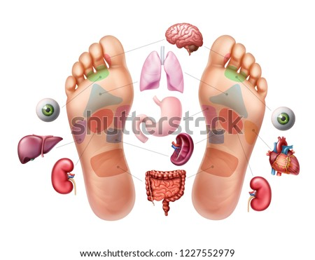 Vector realistic illustration of soles of feet with marked by reflexology zones for acupuncture and organs isolated on white background