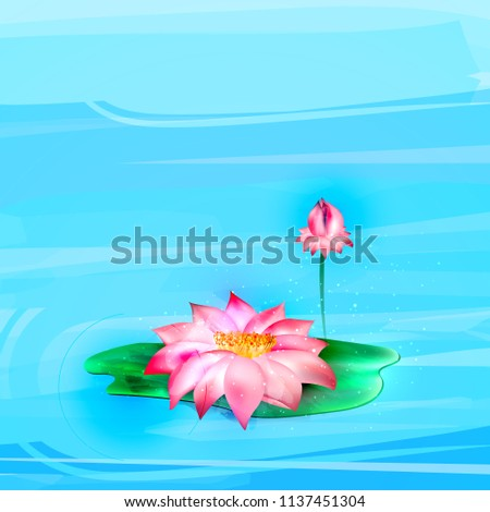 Vector realistic lotus, flowering and closed. Pink floral, natural symbol of spring, valentines, women day, lightness
