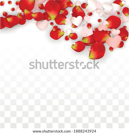 vector realistic petals and