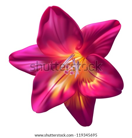 vector realistic purple freesia