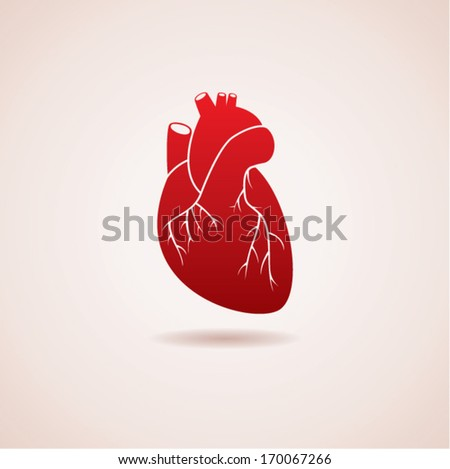 vector red human heart icon