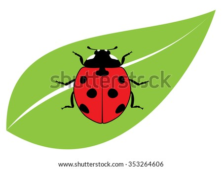 vector red ladybird on a green