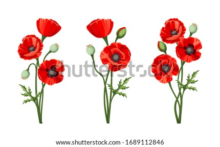 Vector red poppies isolated on a white background. Сток-фото ©