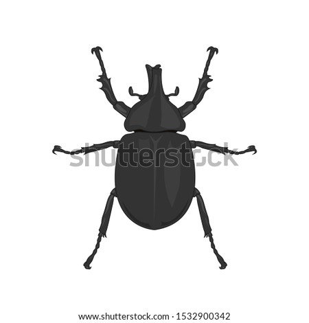 vector  rhinoceros beetle