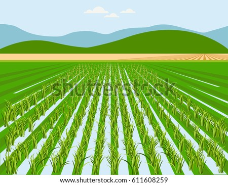 vector rice field and mountain
