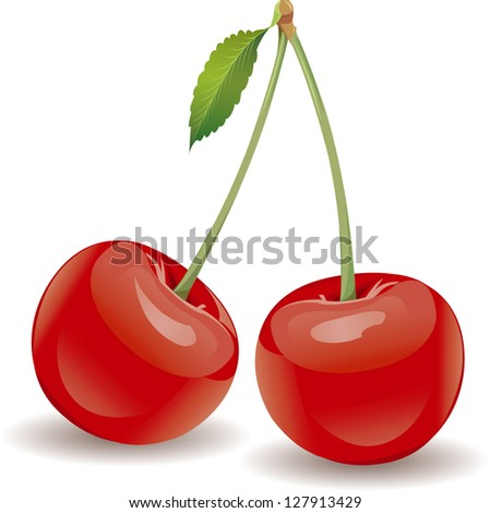 vector ripe red cherry berries