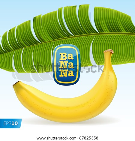Vector. Ripe yellow banana under palm leaf