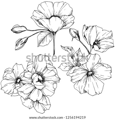 Vector Rosa canina. Floral botanical flower. Wild spring leaf wildflower isolated. Black and white engraved ink art. Isolated rosa canina illustration element. #1256194219