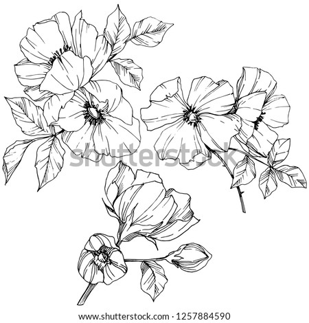 Vector Rosa canina. Floral botanical flower. Wild spring leaf wildflower isolated. Black and white engraved ink art. Isolated rosa canina illustration element. #1257884590
