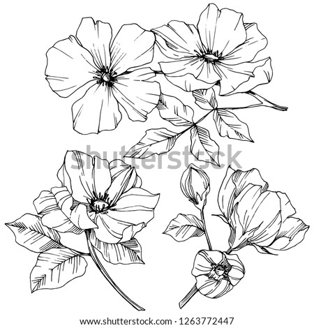Vector Rosa canina. Floral botanical flower. Wild spring leaf wildflower isolated. Black and white engraved ink art. Isolated rosa canina illustration element. #1263772447