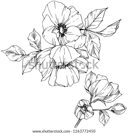 Vector Rosa canina. Floral botanical flower. Wild spring leaf wildflower isolated. Black and white engraved ink art. Isolated rosa canina illustration element.