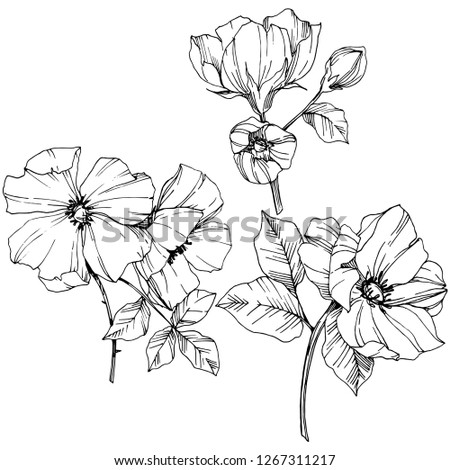 Vector Rosa canina. Floral botanical flower. Wild spring leaf wildflower isolated. Black and white engraved ink art. Isolated rosa canina illustration element. #1267311217