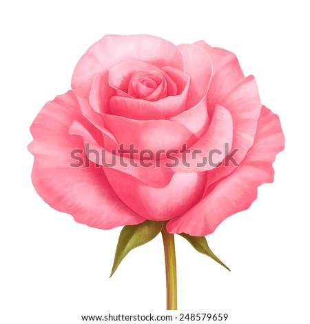 vector rose pink flower