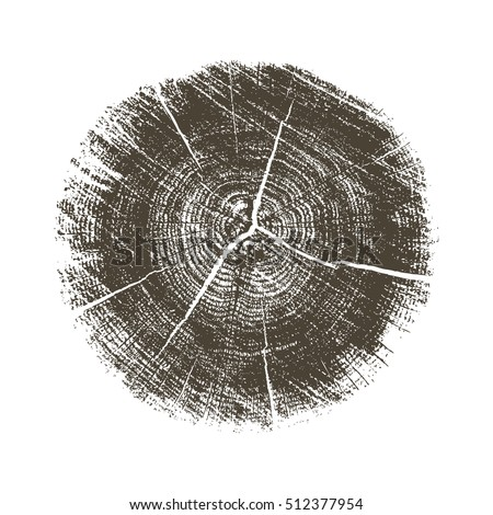 Vector rough aged wood texture cross section of tree rings. Cut slice of wooden stump isolated on white.