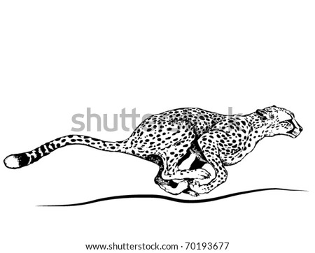 Vector running cheetah.
