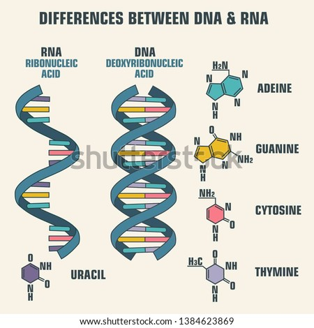 Vector scientific icon spiral of DNA and RNA. An illustration of the differences in the structure of the DNA and RNA molecules.