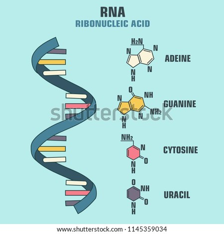 Vector scientific icon spiral RNA. Illustration of the structure of the Ribonucleic acid molecule.