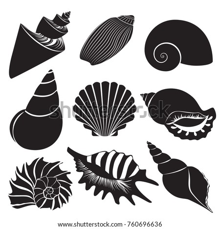 vector sea shells seashell