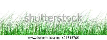 vector seamless green grass gradient pattern texture isolated on white background. abstract herbal illustration
