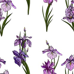 Vector seamless pattern: violet and purple iris flowers, buds and green leaves in boquets. Floral design with hand drawn realistic elements for textile , wallpaper. wrapping paper