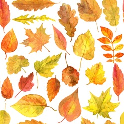 vector seamless pattern with autumn leaves drawing by watercolor, hand drawn elements