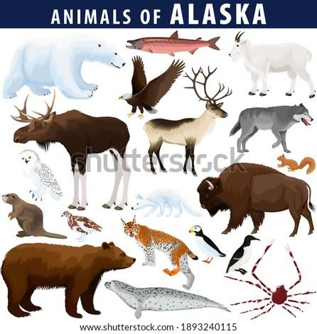 vector set - animals of Alaska: polar bear, bald eagle, moose, lynx, beaver, crab, fox, owl, seal, bison, bear, mountain goat, reindeer, wolf