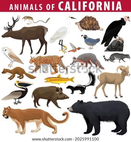vector set - animals of California: kangaroo rat, deer, desert tortoise, brown pelican, desert bighorn sheep, golden trout, california quail, california condor, black bear, puma, hog,  snowy egret.
