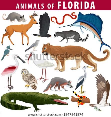 vector set   animals of florida