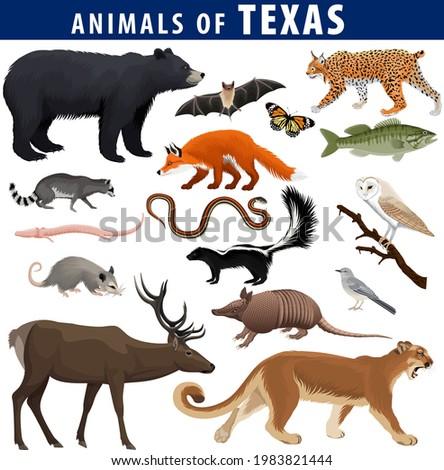 vector set   animals of texas