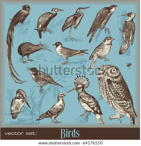 vector set birds variety of vintage bird illustrations