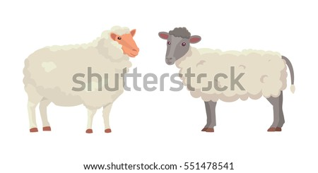 vector set cute sheep and ram