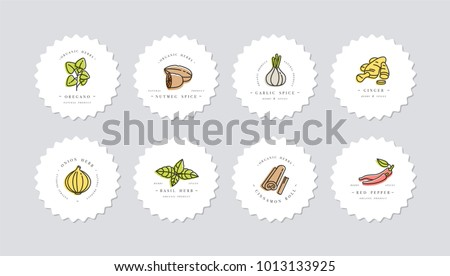 Set of Different Spices - Download Free Vector Art, Stock