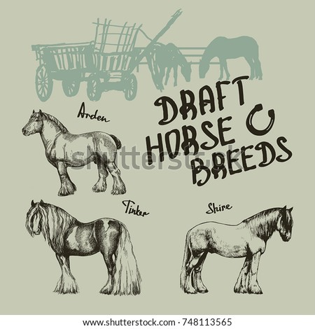 vector set draft horse