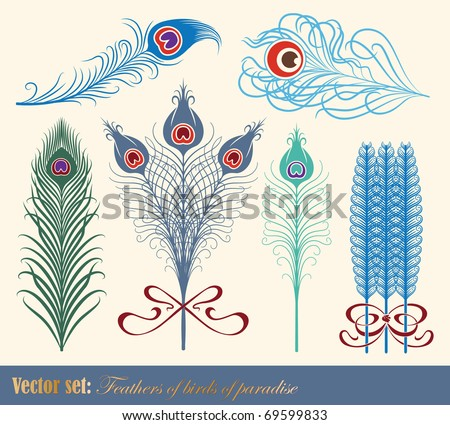 Vector set: Feathers of birds of paradise