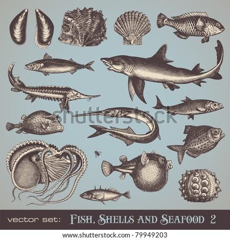 vector set  fish  shells and...