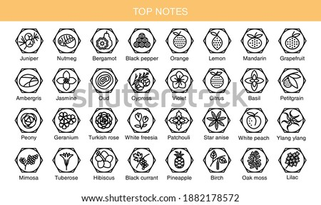 Vector set icons aromas top notes. Top notes pyramid chart with examples of popular aroma essences. Scent categories are oriental, woody, fresh and floral. Trend  examples of scents.