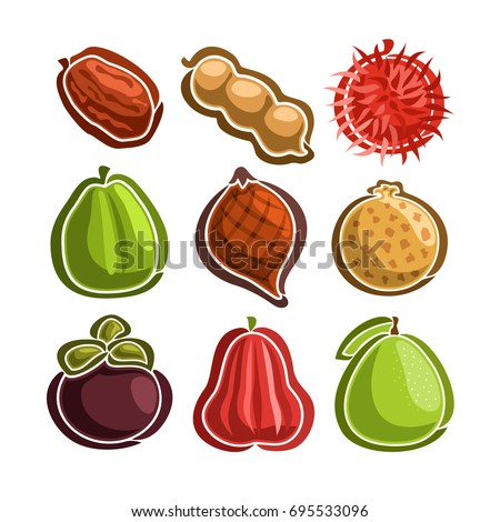 Vector Set icons of colorful exotic Fruits: 9 primitive logos of thai fruits isolated on white background, set of cartoon simple stickers for juice or candy, image of abstract fruit graphic pictograms