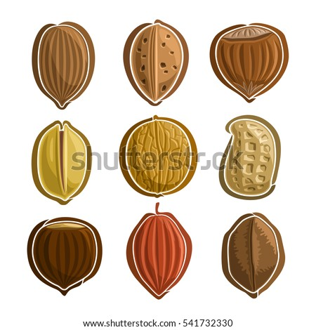 vector set nuts logo  pecan