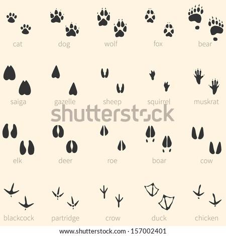 vector set of 20 animal