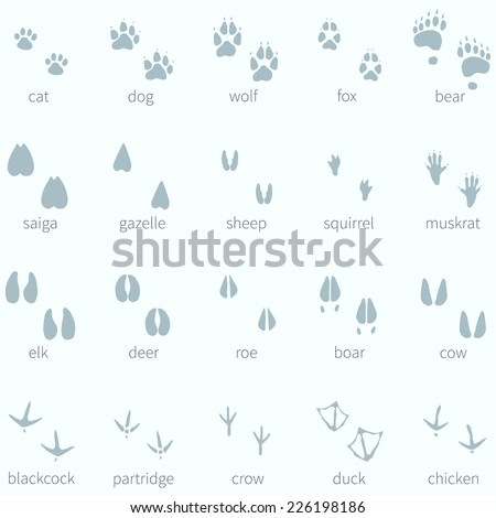 vector set of animals footprint