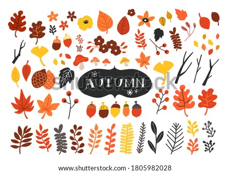 Vector set of autumn icons. Falling leaves, acorns, pinecones and  old twigs. Flat cartoon colorful vector illustration. Stock photo ©