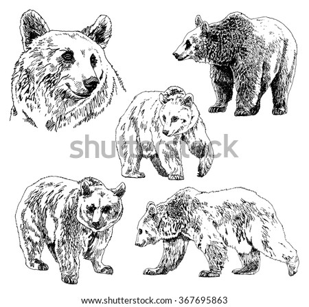 vector set of bears sketch