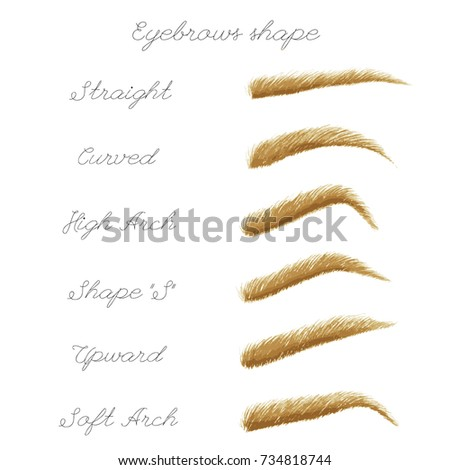 Vector set of blonde eyebrows. Watercolor realistic illustration. Female isolated eyebrows in different shapes.